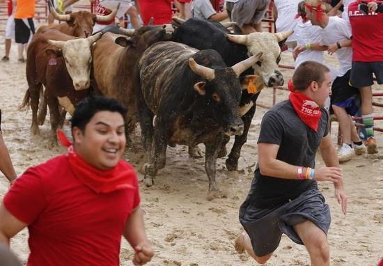 カリフォルニアの牛追い祭り中止、動物保護団体の訴えで