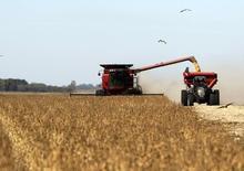 Un sojal en Chacabuco, Argentina, abr 24 2013. Productores agropecuarios de Argentina iniciaron el miércoles una huelga comercial de tres días en protesta contra las amplias regulaciones oficiales para el sector, una medida que podría marcar el comienzo de un fuerte enfrentamiento con el Gobierno.          REUTERS/Enrique Marcarian