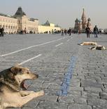 Собаки на Красной площади в Москве 29 марта 2007 года. Выходные в Москве будут солнечными и теплыми, свидетельствует усреднённый прогноз, составленный на основании данных Гидрометцентра России, сайтов intellicast.com и gismeteo.ru. REUTERS/Denis Sinyakov