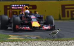 Red Bull Formula One driver Daniel Ricciardo of Australia drives past a plover bird during the third practice session of the Australian F1 Grand Prix at the Albert Park circuit in Melbourne March 14, 2015. REUTERS/Jason Reed