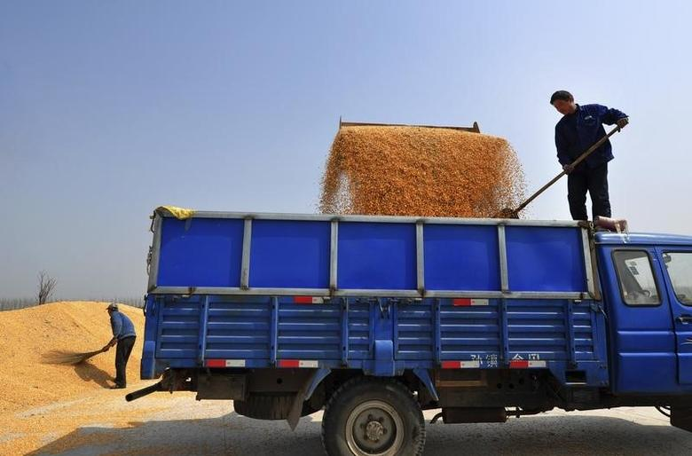 Farmers load corn kernels onto a truck in Zouping county, Shandong province March 26, 2013.  REUTERS/Stringer