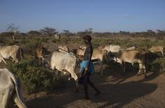 A young Samburu herder drives his cattle back home at the end of the day in Archers Post, Samburu county, northern Kenya March 3, 2013. REUTERS/Siegfried Modola