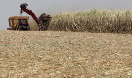 Cana-de-açúcar sendo colhida em plantação em Valparaíso. 18/09/2014 REUTERS/Paulo Whitaker