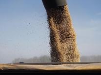 Una máquina cargando granos en Chacabuco, Argentina, abr 24 2013. La producción de soja del ciclo 2014/15 de Argentina podría superar el récord previsto de 60 millones de toneladas, gracias a los elevados rendimientos que registra el cultivo, cuya recolección se encuentra avanzada, dijo el jueves la Bolsa de Cereales de Buenos Aires.          REUTERS/Enrique Marcarian