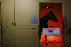 Belmont Stakes hopeful Tale of Verve is seen inside his stable before his morning workout at Belmont Park in Elmont, New York, June 3, 2015. REUTERS/Shannon Stapleton