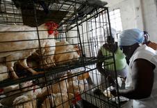 Imagen de archivo de una mujer comprando pollos en una granja en La Habana, feb 23 2008. Cuba suspendió las importaciones de pollos de Estados Unidos debido a la epidemia de gripe aviaria que afecta a las aves en ese país, aseguraron el martes a Reuters operadores estadounidenses.  REUTERS/Claudia Daut