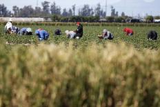Trabajadores recogen frutillas en un campo de una granja en Oxnard, California, 24 de febrero de 2015. Los precios al productor en Estados Unidos subieron más de lo esperado en junio debido a un alza del costo de la gasolina y de una serie de otros bienes, lo que indica que la reciente baja de los precios debido a los costos del petróleo se está acabando. REUTERS/Lucy Nicholson