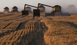 Cosechadoras trabajan en un campo de trigo, cerca de la villa de Talniki, Rusia, 27 de agosto de 2015. El clima seco está amenazando las cosechas de granos del 2016 en Ucrania y Rusia, ambos importantes exportadores de trigo de la región del Mar Negro y que actualmente están en proceso de siembra por la temporada de invierno boreal, dijeron analistas y meteorólogos. REUTERS/Ilya Naymushin