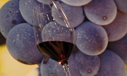 L'application française spécialisée dans le vin WineAdvisor a réalisé une première levée de fonds de 500.000 euros, qui seront alloués à son  développement et son internationalisation. /Photo d'archives/REUTERS/Stefano Rellandini