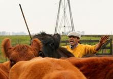 El granjero Eduardo Flores ordenando un rebaño en una granja cerca de Valdés, Argentina, mayo 26, 2012. La producción de carne bovina en Argentina subió apenas un 0,1 por ciento interanual en octubre del 2015, a cerca de 232.000 toneladas, debido a una caída en la tasa de hembras faenadas en el país, dijo el jueves una cámara sectorial.   REUTERS/Enrique Marcarian