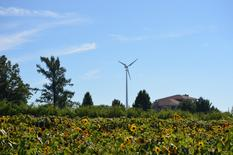 A wind turbine installed by United Wind is shown at the Double A Vineyard in Fredonia, New York in this September 2014 publicity photo released to Reuters on January 4, 2016.   REUTERS/United Wind/Handout