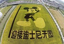 An aerial view shows rice plants in the shape of Mickey Mouse on a paddy field to celebrate the Shanghai Disney Resort   REUTERS/China Daily