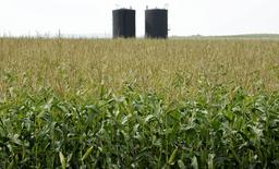 Storage tanks rise above corn fields at a well site about 60 kilometres east of the field office during a tour of Gear Energy's well sites near Lloydminster, Saskatchewan August 27, 2015.   REUTERS/Dan Riedlhuber