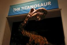 The skeleton cast of a titanosaur is seen during a media preview at the American Museum of Natural History in New York January 14, 2016. The new, 122-foot (37-meter) dinosaur skeleton to be unveiled on Friday is too long to fit in the fossil hall and so its neck and head will poke out toward the elevator banks, offering a surprise greeting when the lift doors open.   REUTERS/Shannon Stapleton