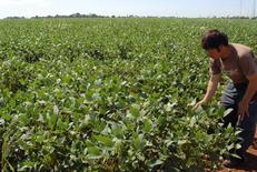 Un agricultor revisa sus plantas de soja en Minga Guazú, en el este de Paraguay. 14 de abril, 2010. La cámara de industrias procesadoras de soja de Paraguay dijo el domingo que la medida adoptada recientemente por Argentina para flexibilizar la importación de granos amenaza a la industria local, que ha invertido más de 450 millones de dólares en los últimos cinco años. REUTERS/Stringer
