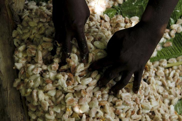 A worker dries cocoa beans at a village in N'Douci, Ivory Coast, November 27, 2015.  REUTERS/Luc Gnago