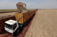 Un camión cargando caña de azúcar en la planta de Da Mata en Valparaíso, Brasil, sep 18, 2014. La cosecha de la campaña 2016/17 de azúcar en la zona centro-sur de Brasil se incrementaría un 10 por ciento frente a la temporada previa, a 34 millones de toneladas, dijo el martes un reporte de INTL FCStone.      REUTERS/Paulo Whitaker