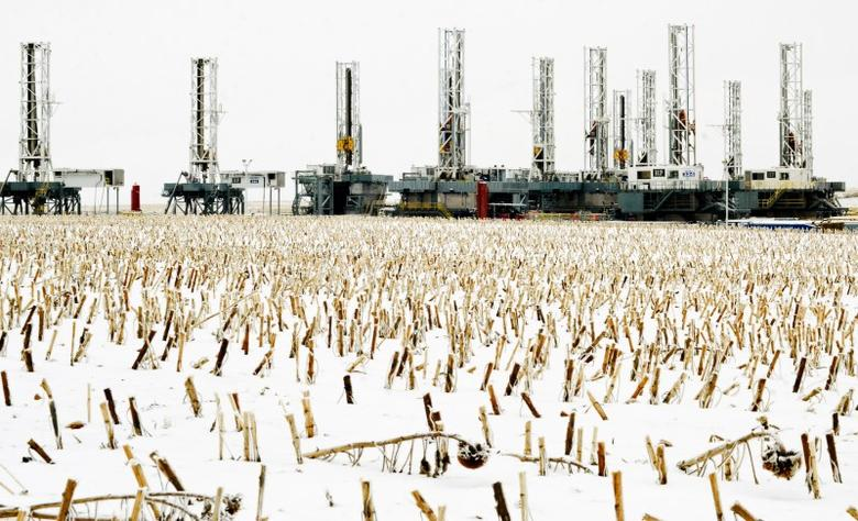 Sunflowers stalks punctuate the snow in a field near dormant oil drilling rigs which have been stacked in Dickinson, North Dakota January 21, 2016. REUTERS/Andrew Cullen