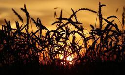 Пшеничное поле в Красноярском крае. 6 сентября 2014 года. Россия, один из крупнейших экспортеров пшеницы, вероятно, получит высокий урожай этим летом, что вызовет усиление конкуренции на и без того перенасыщенном мировом рынке, готовящимся начать 2016/2017 маркетинговый год с рекордными запасами. REUTERS/Ilya Naymushin