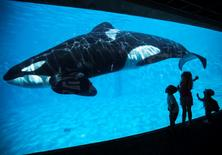 Young children get a close-up view of an Orca killer whale during a visit to the animal theme park SeaWorld in San Diego, California, in this file photo taken March 19, 2014. REUTERS/Mike Blake/Files