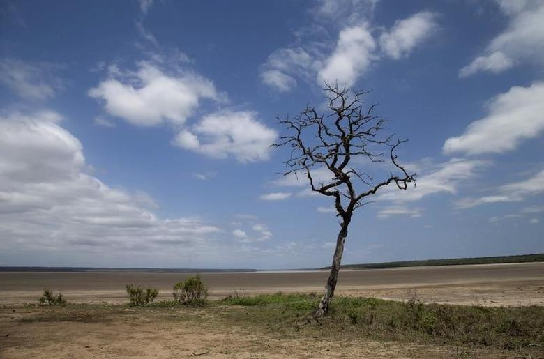 Lake St Lucia is almost completely dry due to drought conditions in the iSimangaliso Wetland Park, northeast of Durban, South Africa February 25, 2016. REUTERS/Rogan Ward