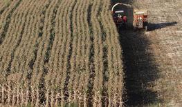 Una cosecha de maíz en Santo Antonio do Jardim, Brasil, feb 6 2014. Los pronósticos de una cosecha récord de maíz de invierno en Brasil resultaron bastante optimistas tras el término anticipado de la temporada de lluvias ante el debilitamiento del fenómeno climático de El Niño, lo que podría prolongar las fuertes importaciones del grano en el país sudamericano.   REUTERS/Paulo Whitaker