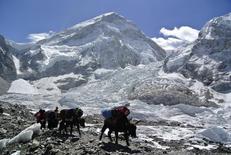 Alpinistas e animais vistos em acampamento no Himalaia.     07/11/2014     REUTERS/Phurba Tenjing Sherpa
