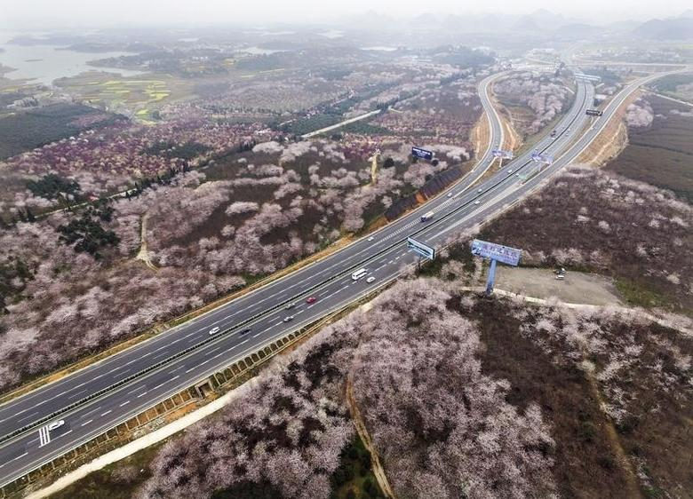 Blooming flowers are seen along a highway in Guiyang, Guizhou Province, China, March 15, 2016.  REUTERS/Stringer