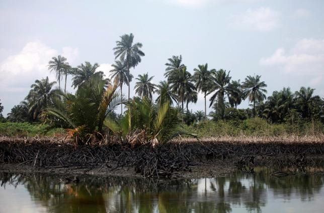 An oil slick clots the bottom of mangroves in Bodo creek in Ogoniland, near Nigeria's oil hub city of Port Harcourt December 4, 2012.    REUTERS/Akintunde Akinleye/File Photo