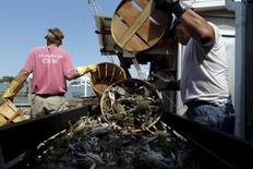 Workers unload bushel baskets of live blue crabs into a large carriage before pressure steaming them at the A.E. Phillips & Son Inc. crab picking house on Hooper's Island in Fishing Creek, Maryland August 26, 2015.  REUTERS/Jonathan Ernst