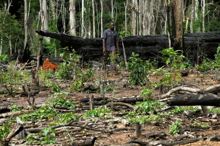Burnt cocoa farm in a protected area (Source: Reuters)
