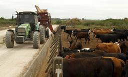 Imagen de archivo. Ganado es alimentado en corrales en Magdalena, al sur de Buenos Aires. 14 de enero de 2016. La producción de carne bovina en Argentina retrocedió un 11,3 por ciento interanual en junio, a cerca de 214.000 toneladas, por una reducción en la cantidad de hembras faenadas, dijo el miércoles una cámara sectorial. REUTERS/Enrique Marcarian