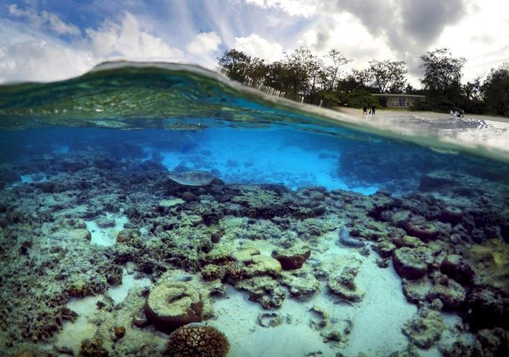 Some fish tackle ocean global warming by pretending its night tourists stand in front of huts that form part of the lady elliot island eco resort where a turtle digs for food amongst the coral in the islands lagoon sciox Images