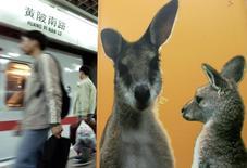 Пассажиры ждут поезда в шанхайской подземке рядом с рекламирующим Австралию постером с изображением кенгуру. Фото от 26 мая 2002 года. Австралия отказалась продать КНР крупнейшего оператора электросетей. REUTERS/Claro Cortes IV