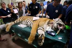 "Laziz, an 8-year-old tiger, part of group of 15 animals from Gaza, the last survivors of the ""worst zoo in the world"", where dozens of animals died of starvation, is checked at the Hebrew University Veterinary Teaching Hospital in Rishon LeZion in Israel, after leaving Gaza on Wednesday for sanctuary out the Palestinian territory, in a rescue mission organised by international animal welfare group Four Paws August 24, 2016. REUTERS/Nir Elias"