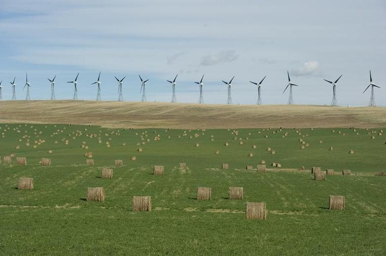 A wind farm generates electricity near bales of hay in the foothills of the Rocky Mountains near the town of Pincher Creek, Alberta September 27, 2010.  REUTERS/Todd Korol