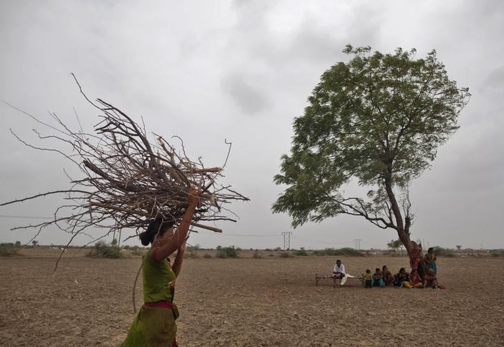 A village woman carries firewood as others rest under a tree after they migrated due to shortage of water on the outskirts of Sami town in Gujarat August 6, 2012. REUTERS/Ahmad Masood/Files