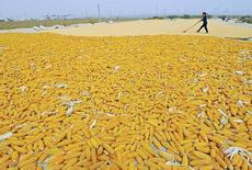 Funcionário durante colheita de milho em Qingzhou, China.     27/09/2013         REUTERS/China Daily/Files