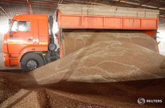 Водитель грузовика выгружает собранное зерно во время сбора урожая в Ставропольском крае.  Минсельхоз России говорит, что урожай зерна в этом году может превысить прогнозируемый уровень в 116 миллиона тонн при благоприятной погоде.REUTERS/Eduard Korniyenko