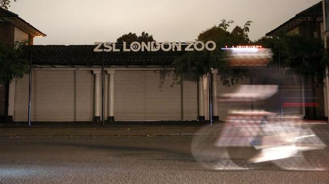 10月13日、英国のロンドン動物園で、飼育されているゴリラが一時囲いから抜け出し、来園者が安全のためカフェから出られなくなるなどの騒ぎがあった(2016年 ロイター/Neil Hall )