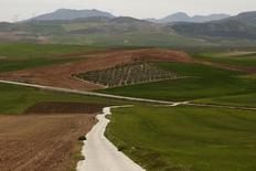 El grupo aceitero Deoleo anunció el viernes el cierre de una planta en Italia y la venta de otra en Málaga, desprendiéndose de casi el 18 por ciento de su plantilla y anotándose una minusvalía de cuatro millones de euros. En la imagen, un olivar a las afueras de Teba, cerca de Málaga, el 9 de abril de 2014. REUTERS/Jon Nazca