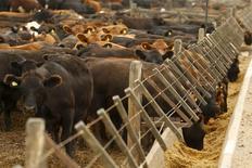 Unas vacas en un comedero en Magdalena, Argentina, ene 14, 2016. La producción de carne bovina en Argentina retrocedió un 1,6 por ciento interanual en octubre, a cerca de 223.000 toneladas, como consecuencia de la sostenida reducción en la faena local de animales, dijo el miércoles una cámara sectorial.  REUTERS/Enrique Marcarian