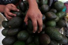 A man arranges avocados at a market in Mexico City, Mexico, November 7, 2016. REUTERS/Edgard Garrido