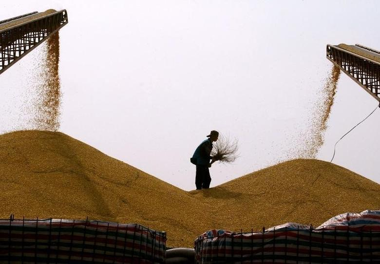 2004年5月25日,吉林长春一家玉米加工厂,一名工人在玉米堆上。REUTERS/Claro Cortes IV