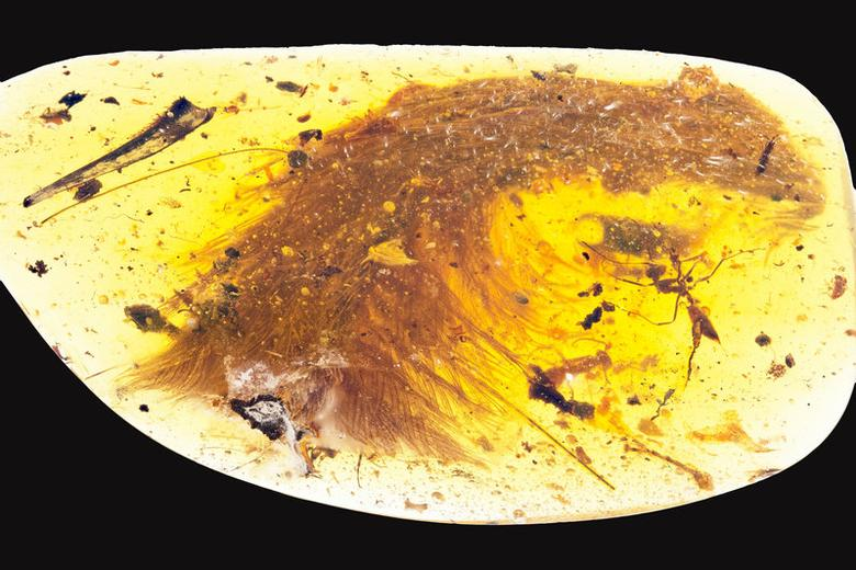 A chunk of amber - fossilized resin - spotted by a Chinese scientist in a market in Myitkyina, Myanmar, last year shows the tip of a preserved dinosaur tail section in this image released by the Royal Saskatchewan Museum in Canada on December 8, 2016.  Courtesy R.C. McKellar/Royal Saskatchewan Museum (RSM)/Handout via REUTERS