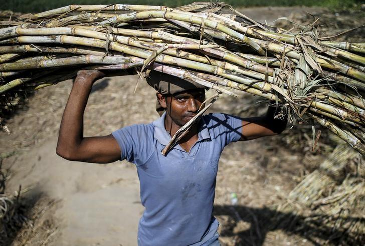 A worker carries a bundle of sugarcane on his head at a farmland near Modinagar in Uttar Pradesh, March 4, 2016. REUTERS/Anindito Mukherjee/Files