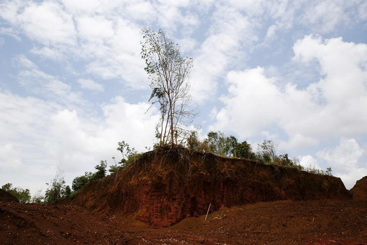 A durian orchard remains untouched in an area exploited by bauxite mining companies in Kuantan, Malaysia, February 16, 2016. Picture taken February 16, 2016. REUTERS/Olivia Harris/Files