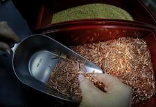 Un empleado de la planta Krastsvetmet revisando piezas de cobre en Krasnoyarsk, Rusia, dic 14, 2016. Los precios del cobre cayeron el viernes por tomas de ganancias de los inversores sobre posiciones largas antes del receso de Navidad, mientras crecientes dudas sobre la demanda en China, el principal consumidor mundial del metal rojo, reforzaban la idea de que el alza reciente fue exagerada.  REUTERS/Ilya Naymushin