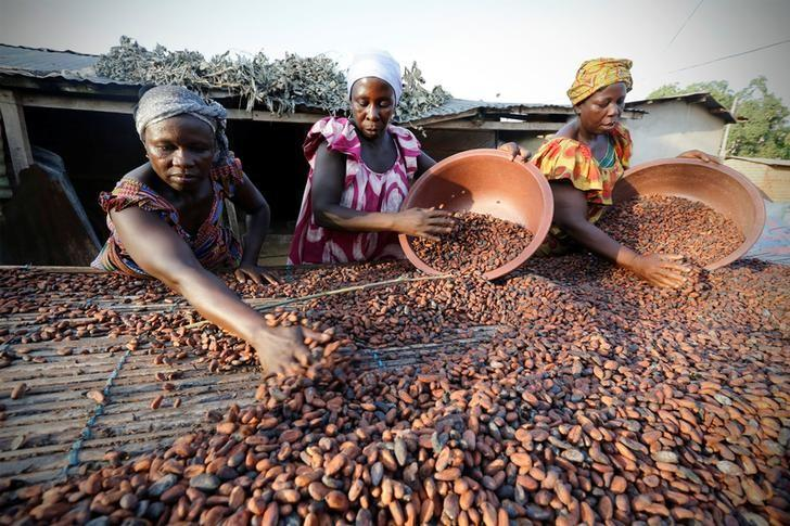 Women from a local cocoa farmers association called BLAYEYA spread cocoa beans to dry in Djangobo, Niable in eastern Ivory Coast, November 17, 2014.  REUTERS/Thierry Gouegnon/File Photo