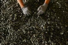 Du minerai de nickel. Le gouvernement de Nouvelle-Calédonie a autorisé trois compagnies minières à exporter au total jusqu'à deux millions de tonnes annuelles de minerai de nickel vers la Chine, dans le cadre des efforts déployés pour soutenir ce secteur éprouvé par la chute des cours. /Photo d'archives/REUTERS/Yusuf Ahmad
